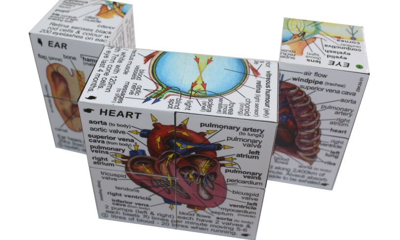 Human Body Cube Book - Clever!