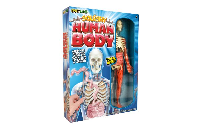 Squishy Human Body Box