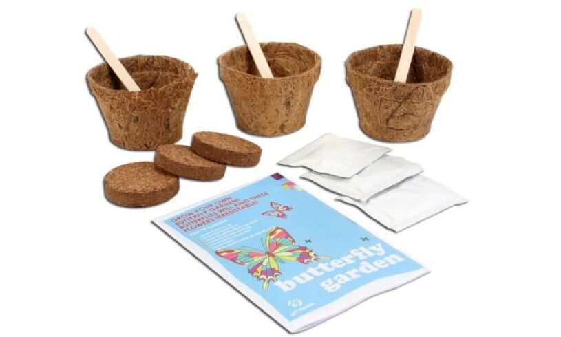 Grow your own Butterfly Garden Contents