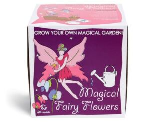Grow your own Magical Fairy Flowers