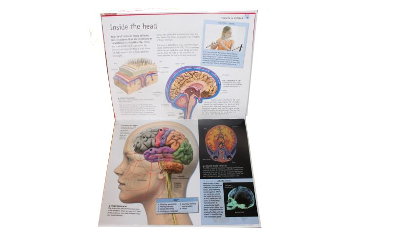 The Ultimate Guide - BODY Brain