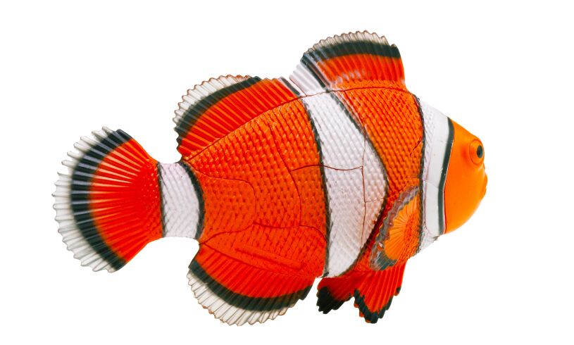 Thames and Kosmos Clownfish 3D Puzzle Back