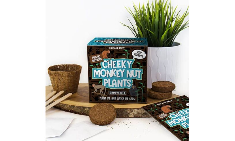 Cheeky Monkey Nut Plants