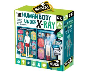 The Human Body Under X-Ray