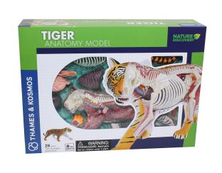Thames and Kosmos Tiger Anatomy Model